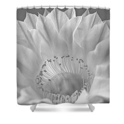 Cactus Bloom Burst Shower Curtain by Shelly Gunderson