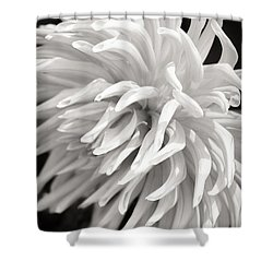 Cactus Dahlia Shower Curtain