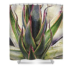 Shower Curtain featuring the photograph Cactus Desert Plant by Julie Palencia