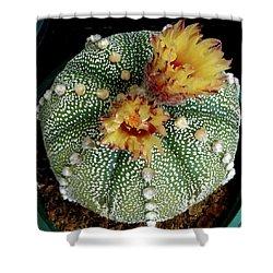 Cactus Flower 10 Shower Curtain