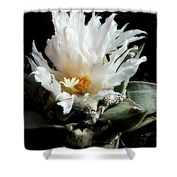 Cactus Flower 8 Shower Curtain
