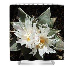 Cactus Flower 9 Shower Curtain