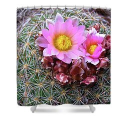 Cactus Flower  Shower Curtain by Alan Johnson