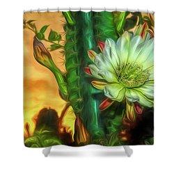Cactus Flower At Sunrise Shower Curtain