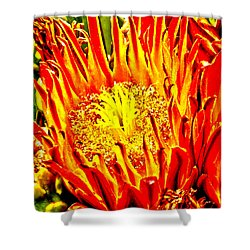 Cactus Flower Shower Curtain by Judi Saunders