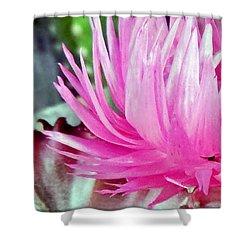 Cactus Flower Shower Curtain by Mikki Cucuzzo
