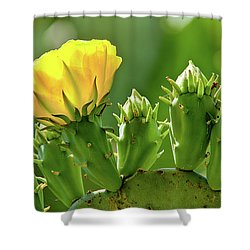 Cactus Flower On A Cactus Plant Shower Curtain by Dan Carmichael