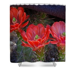 Shower Curtain featuring the photograph Cactus Flowers by Frank Stallone