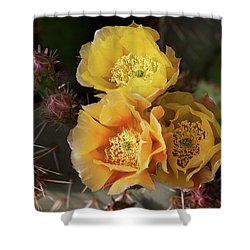 Yellow Cactus Flowers Shower Curtain