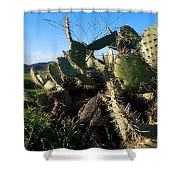 Cactus In The Mountains Shower Curtain