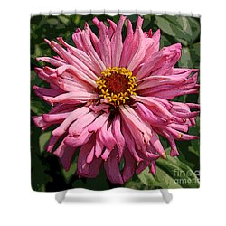 Shower Curtain featuring the photograph Cactus Petal Zinnia by Jeanette French