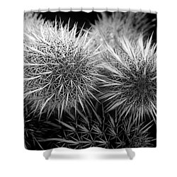 Shower Curtain featuring the photograph Cactus Spines by Phyllis Denton