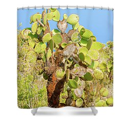Shower Curtain featuring the photograph Cactus Trees In Galapagos Islands by Marek Poplawski