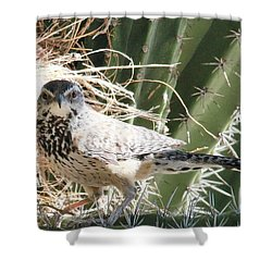 Cactus Wren 3 Shower Curtain