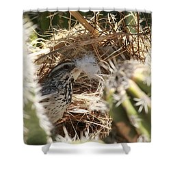 Cactus Wren Feather Shower Curtain