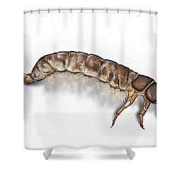 Caddisfly Larva Nymph Psychomiidae Hydropsyche Pellucidula -  Shower Curtain