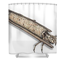 Caddisfly Limnephilidae Anabolia Nervosea Larva Nymph -  Shower Curtain