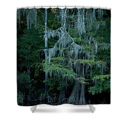 Caddo Lake #4 Shower Curtain