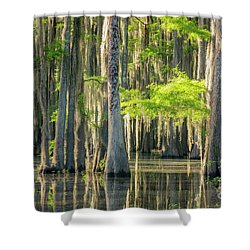 Caddo Swamp 1 Shower Curtain
