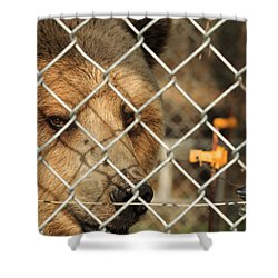Caged Bear Shower Curtain