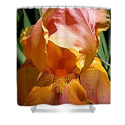 Cajun Sunset Shower Curtain by Renee Trenholm
