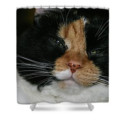 Cal-2 Shower Curtain