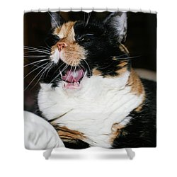Cal-3 Shower Curtain