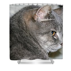 Cal-6 Shower Curtain