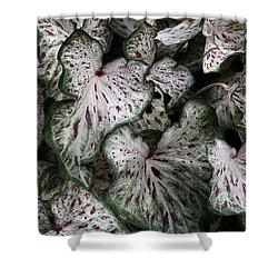 Caladium Leaves Shower Curtain