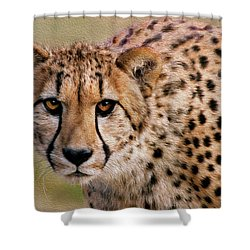 Calculated Look Shower Curtain