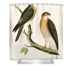 Calcutta Sparrow Hawk Shower Curtain by English School