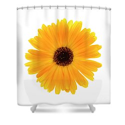 Shower Curtain featuring the photograph Calendula Flower by Elena Elisseeva