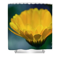 Shower Curtain featuring the photograph Calendula by Sharon Mau