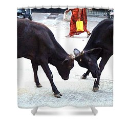 Calf Fighting Shower Curtain