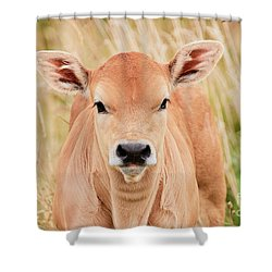 Shower Curtain featuring the photograph Calf In The High Grass by Nick Biemans