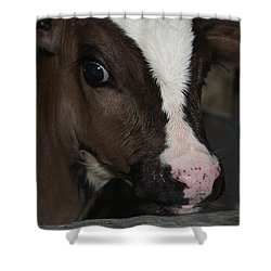Shower Curtain featuring the photograph Calf Portrait by Vadim Levin