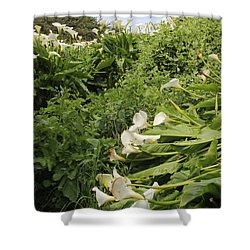 Shower Curtain featuring the photograph Cali Can You Hear Me by Marie Neder