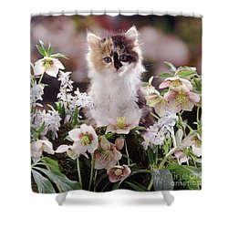 Calico And Scillas Shower Curtain