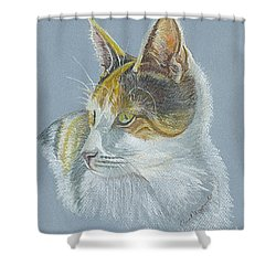Shower Curtain featuring the drawing Calico Callie by Carol Wisniewski