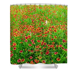 Calico Field Of Indian Paintbrush Shower Curtain