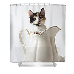 Calico Kitten In White Pitcher Shower Curtain by Garry Gay