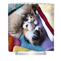 Calico Kitten On Towels Shower Curtain by Garry Gay