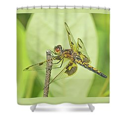 Calico Pennant Shower Curtain