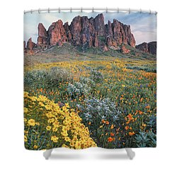 California Brittlebush Lost Dutchman Shower Curtain by Tim Fitzharris