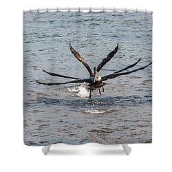 California Brown Pelicans Flying In Tandem Shower Curtain