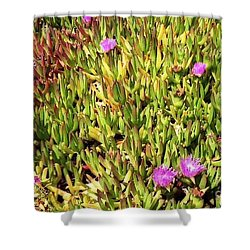 California Coast Ice Plant Shower Curtain by Ted Pollard