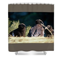 California Condors Shower Curtain