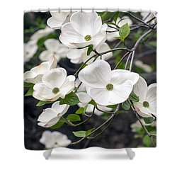 California Dogwood Shower Curtain