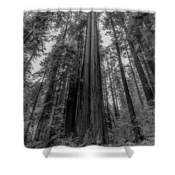 California Forest Shower Curtain