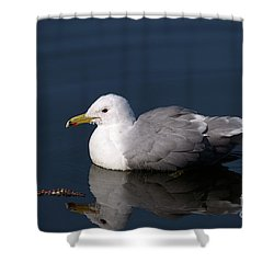 Shower Curtain featuring the photograph California Gull by Sharon Talson